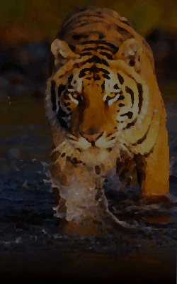 India travel blog 'Big Cats and Holy Ghats'